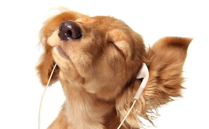 blog_argentine_tango_listening_to_music